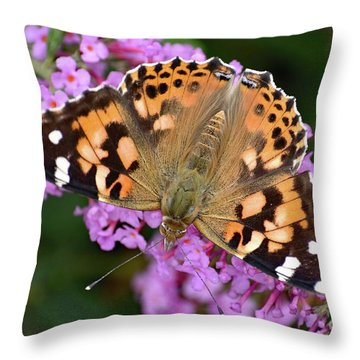 Painted Lady On Pink Butterfly Bush Throw Pillow