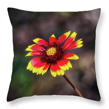 Hand Painted Throw Pillow