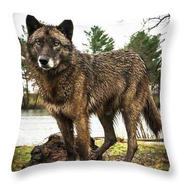 Handsome Niko Throw Pillow