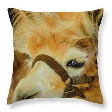 Happy Alpaca Throw Pillow