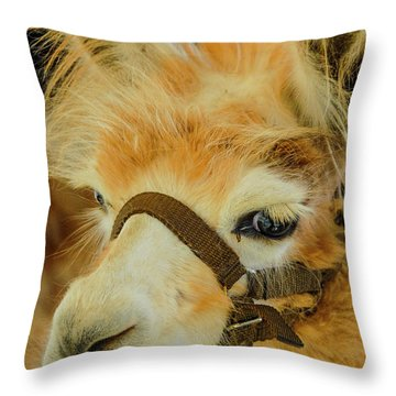 Happy Alpaca Throw Pillow