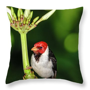 Happy Valentine's Day Bird Throw Pillow