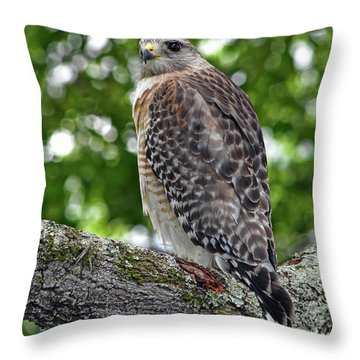 Hawk Branching Out Throw Pillow