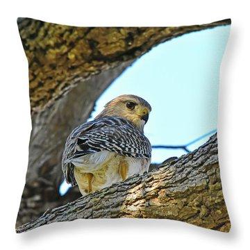 Hawk On Pine Throw Pillow