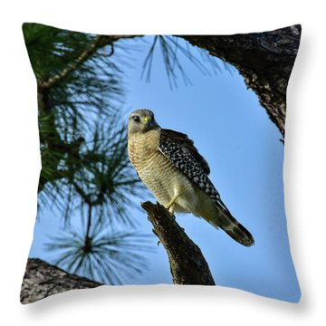 Hawk Watching Intently Throw Pillow