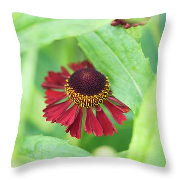 Throw Pillow featuring the photograph Helenium Ruby Tuesday Flower by Tim Gainey