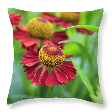 Throw Pillow featuring the photograph Helenium Ruby Tuesday by Tim Gainey