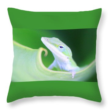 Hello, Anole. 2 Throw Pillow