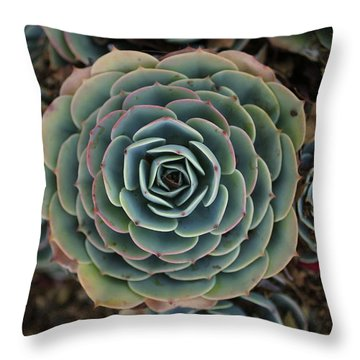 Hen And Chicks Succulent Throw Pillow