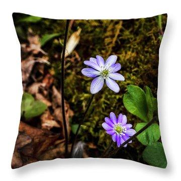 Hepatica In Bloom Throw Pillow