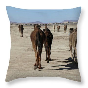 Herd Of Camels Crossing The Highway Near  Rissani Throw Pillow