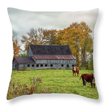 Herefords In Fall Throw Pillow