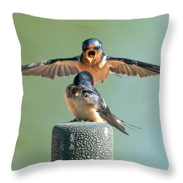 Hey, Babe, Let's Rock N Roll.  Barn Swallows Throw Pillow