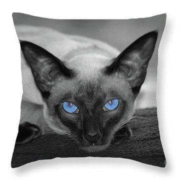 Hey There Blue Eyes - Siamese Cat Throw Pillow