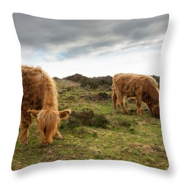 Highland Cattle Feeding At Baslow Edge Throw Pillow