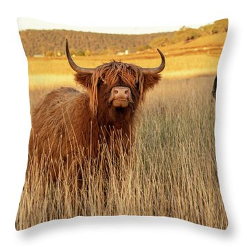 Throw Pillow featuring the photograph Highland Cows On The Farm by Rob D Imagery