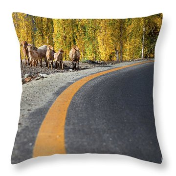 Throw Pillow featuring the photograph Highway Story by Awais Yaqub