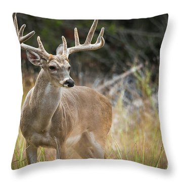 Hill Country Whitetail Throw Pillow