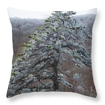 Hoarfrost Gathers Throw Pillow