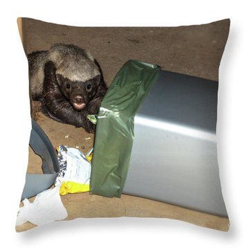 Honey Badger Looking In Rubbish Bin Throw Pillow