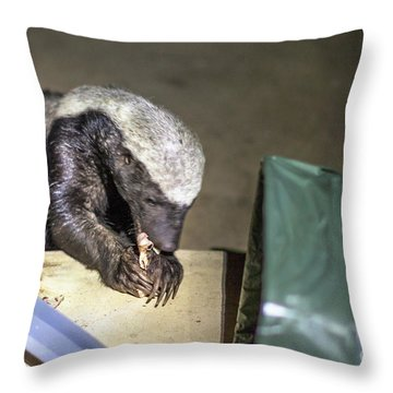 Honey Badger South Africa Throw Pillow