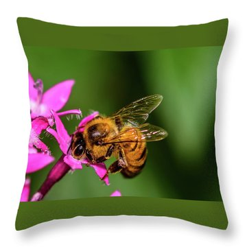 Throw Pillow featuring the photograph Honey Bee by Dheeraj Mutha