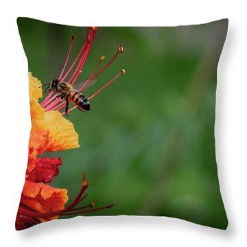 Honey Bee Extraction Throw Pillow