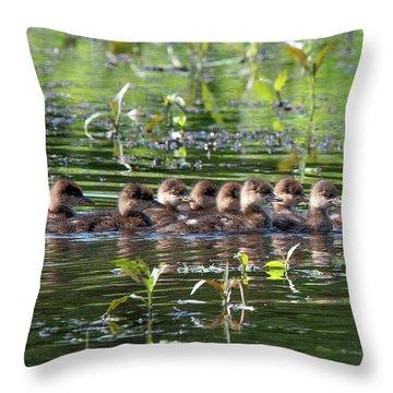 Hooded Merganser Ducklings Dwf0203 Throw Pillow