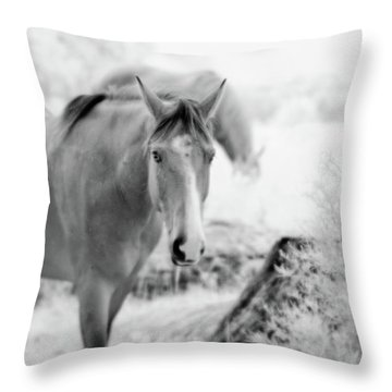 Horse In Infrared Throw Pillow