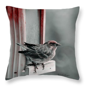 House Finch On Feeder Throw Pillow