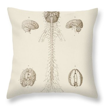 Human S Brain Illustrated By Charles Dessalines D' Orbigny  1806 1876  Throw Pillow