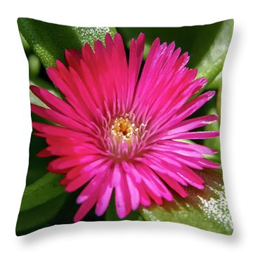 Humble And Proud Throw Pillow