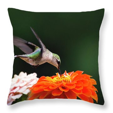 Hummingbird In Flight With Orange Zinnia Flower Throw Pillow