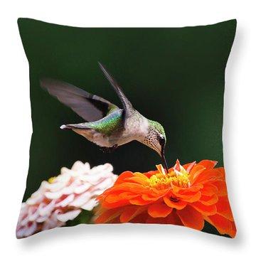 Hummingbird In Flight With Orange Zinnia Flower Throw Pillow