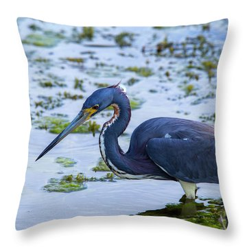 Hunt For Lunch Throw Pillow