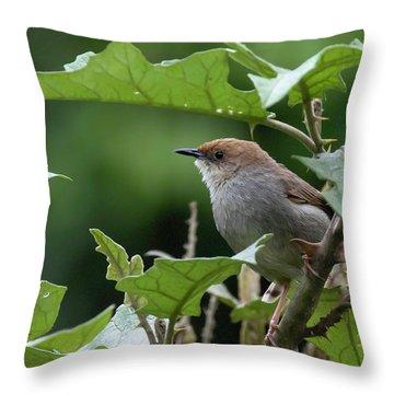 Hunter's Cisticola Throw Pillow