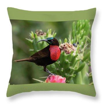 Hunter's Sunbird Throw Pillow