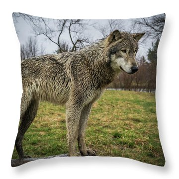 I See It Throw Pillow