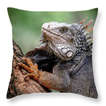Throw Pillow featuring the photograph Iguana's Portrait by Francisco Gomez