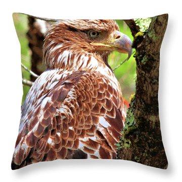 Immature Eagle Throw Pillow
