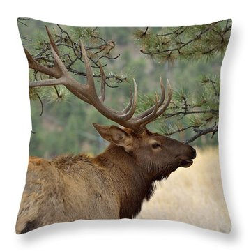 Colorado Wildlife Throw Pillows