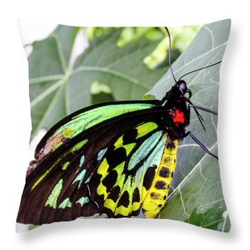 Insect Kaleidescope Throw Pillow