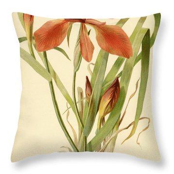 Iris Cuprea Copper Iris.  Throw Pillow