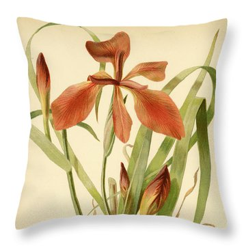 Iris Cuprea Copper Iris.  Throw Pillow