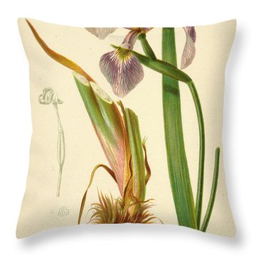 Iris Versicolor Blue Flag Throw Pillow