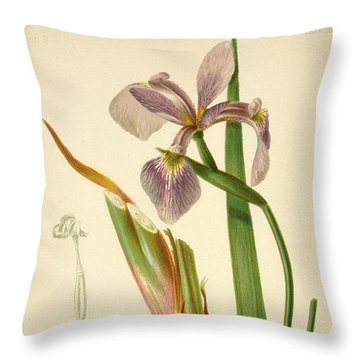 Iris Versicolor Blue Flag Throw Pillow