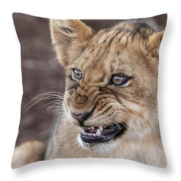 Irritated Lion Cub Throw Pillow