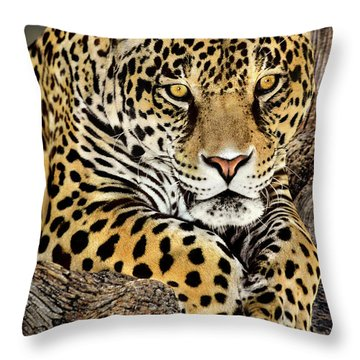 Jaguar Portrait Wildlife Rescue Throw Pillow