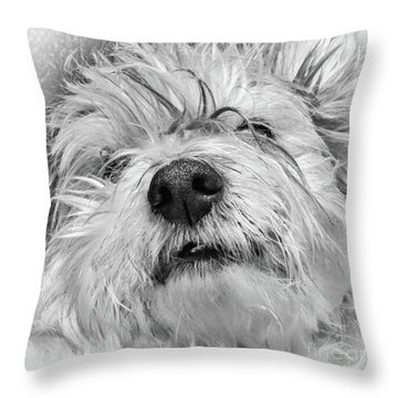 Coton De Tulear Dog Throw Pillow