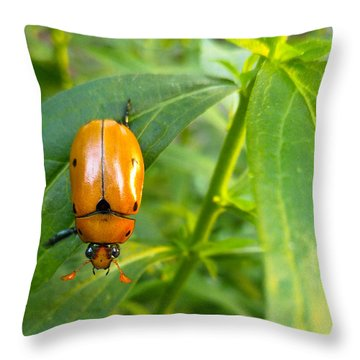 Throw Pillow featuring the photograph June Bug by Carl Young
